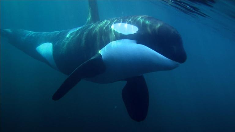 """Cena de """"A baleia"""""""