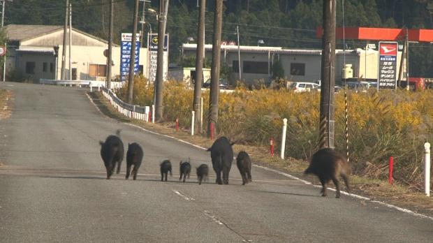 """Cena de """"Fukushima: um registro de coisas vivas"""""""