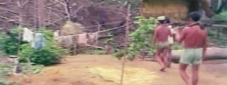 Amazonas-amazonas