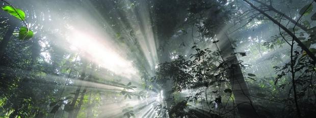 """Cena do filme """"Era uma vez na Floresta"""""""